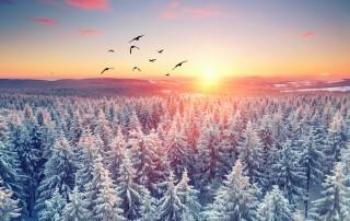 Winterwald - romantischer kalter Abend